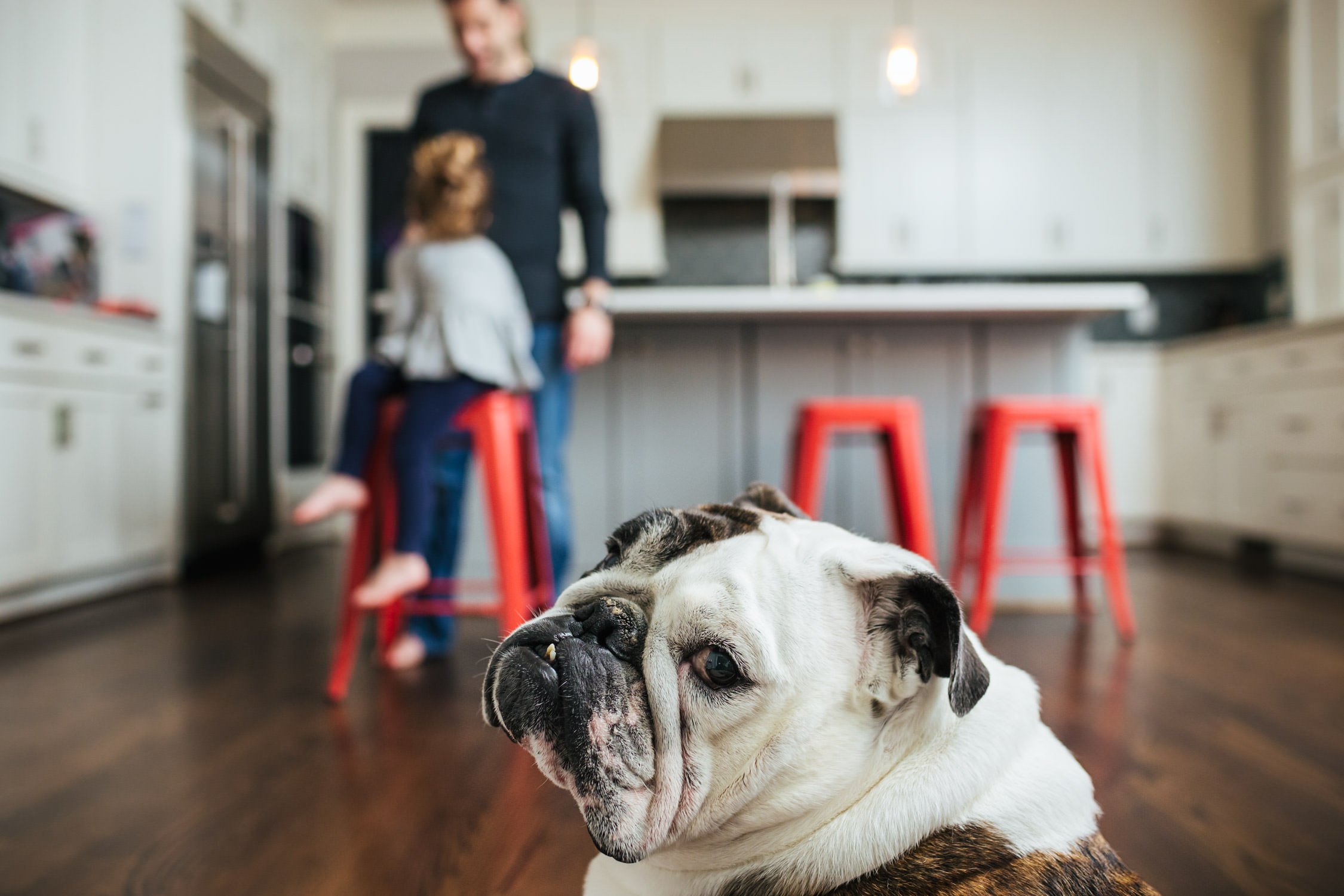 dog looking at camera in kitchen, washington dc commercial photography